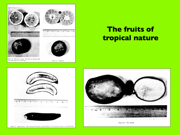 The fruits of tropical nature.001
